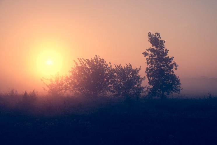 foggy_morning-9