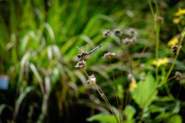 haggerman_flowers_-6