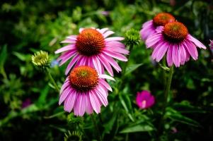 haggerman_flowers_-7